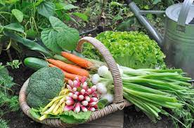 How to Start a Vegetable Garden - Vegetable Garden Plans